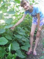 Выращиваем овощи в теплице